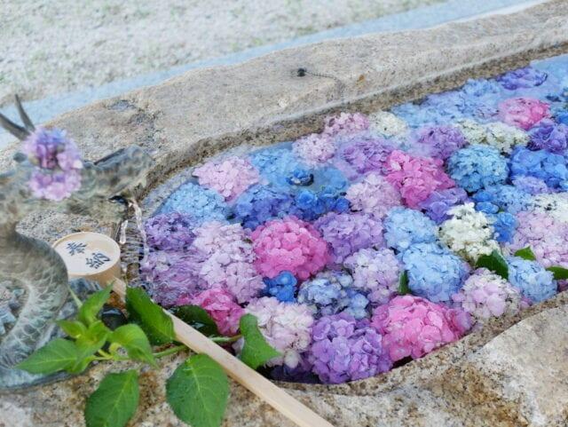 金井神社の花手水の画像